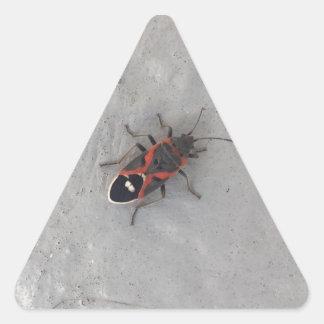 Box Elder Beetle Triangle Sticker