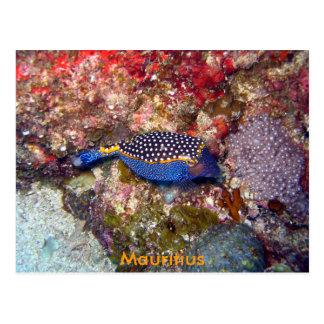 Box fish, Mauritius Postcard