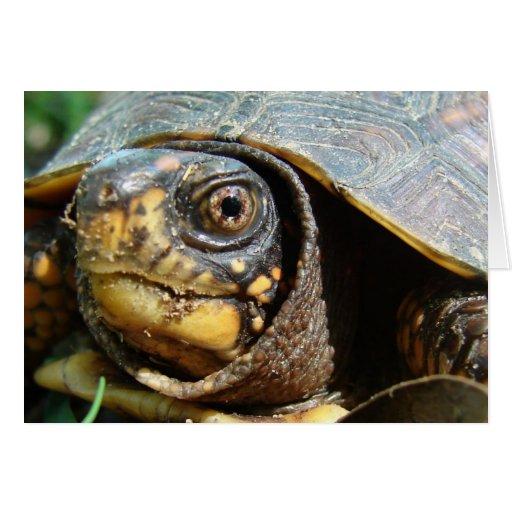 Box Turtle - Blank Card