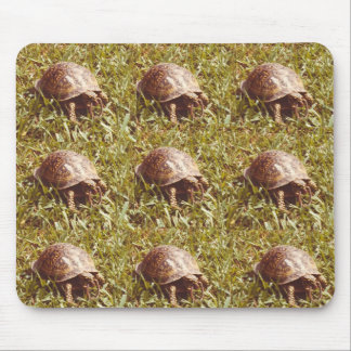 Box Turtle eating worm Mouse Pad