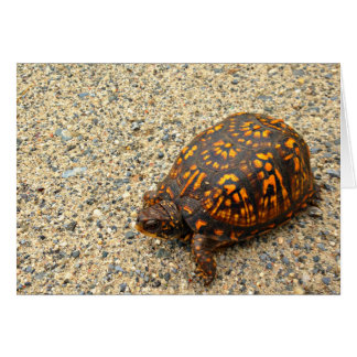 Box Turtle Encouragement Greeting Card