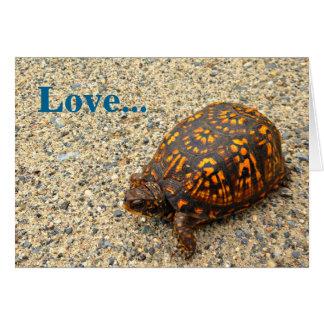 Box Turtle Love Greeting Card