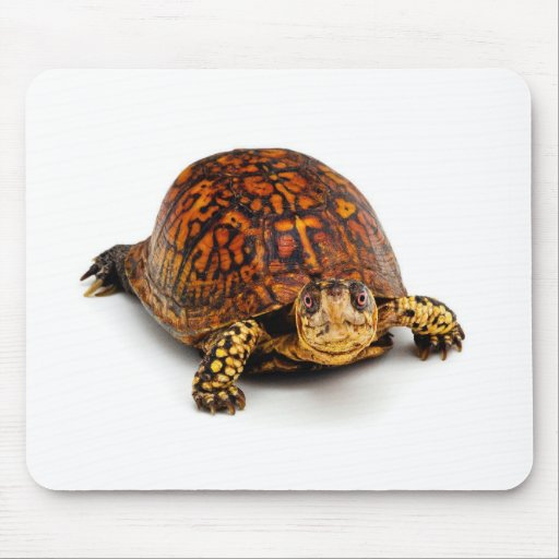 Box Turtle Mouse Pads