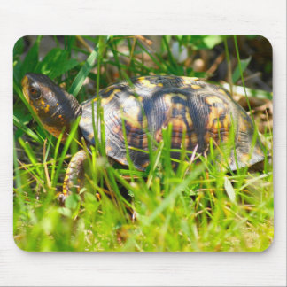 Box Turtle Mousepad