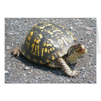 Box Turtle Note Card