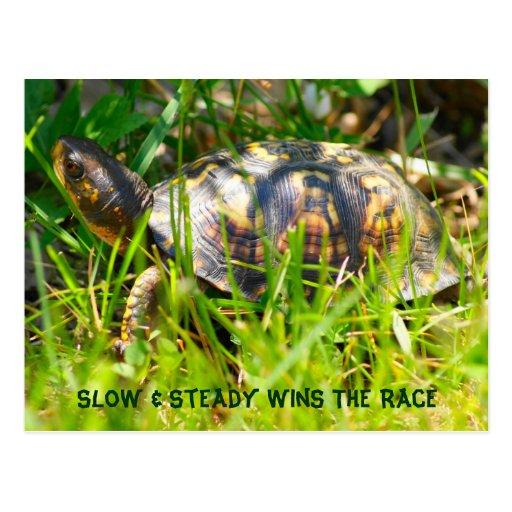 Box Turtle Postcard