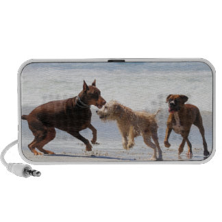 Boxer Doberman - Play Date at the Beach Laptop Speakers