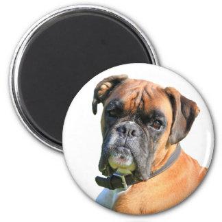 Boxer dog beautiful photo portrait 6 cm round magnet