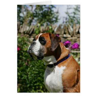 Boxer Dog in the Flowers Card