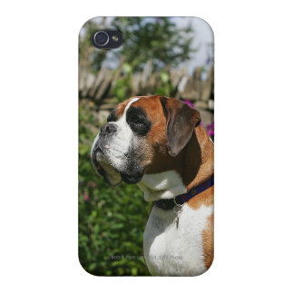 Boxer Dog in the Flowers Covers For iPhone 4