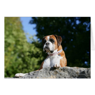 Boxer Dog Laying on a Rock Card