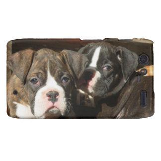 Boxer dog Motorola Droid Razr phone case Motorola Droid RAZR Case
