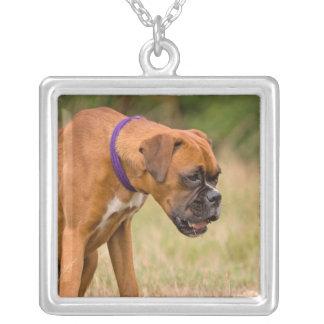 Boxer dog necklace, gift idea