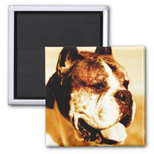 Boxer Dog Portrait magnet