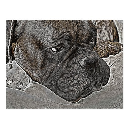 Boxer Dog Post Cards