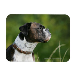 Boxer Dog Profile Rectangular Photo Magnet