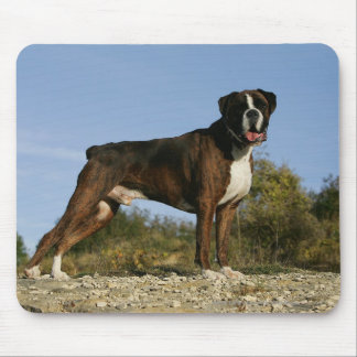 Boxer Dog Show Stance Mouse Pad