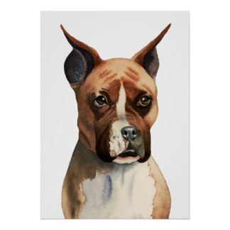 Boxer Dog Watercolor Painting Poster