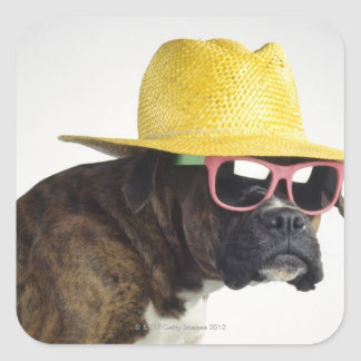 Boxer dog with hat and glasses square sticker