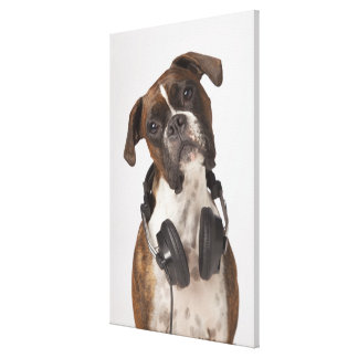 boxer dog with headphones gallery wrapped canvas