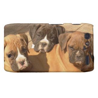 Boxer dogs Motorola Droid Razr phone case Motorola Droid RAZR Case