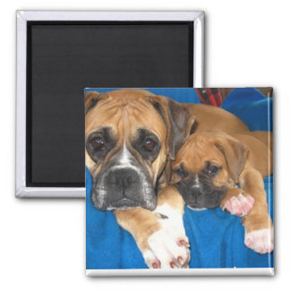 Boxer dogs square magnet