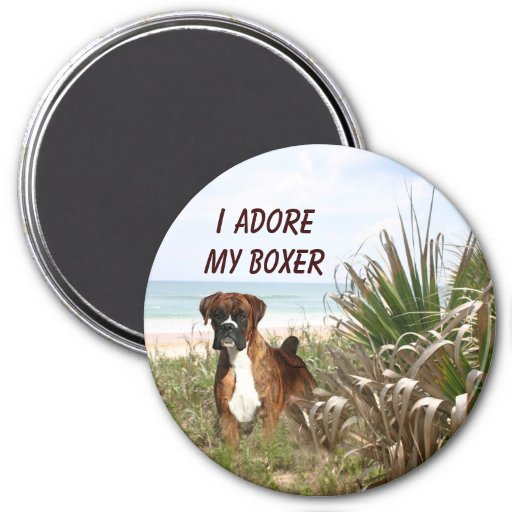 Boxer In Beachgrass Magnet