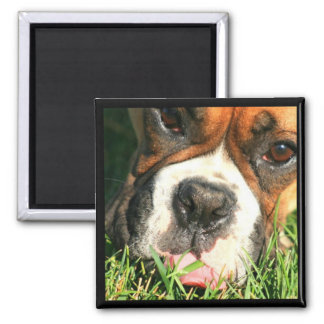 Boxer in grass magnet