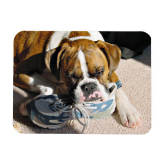 Boxer Love Rectangular Photo Magnet