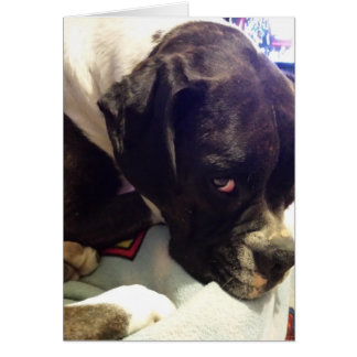 Boxer- Missing You greeting card
