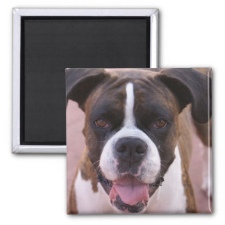 Boxer Pup Square Magnet Magnets