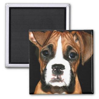 Boxer pup square magnet