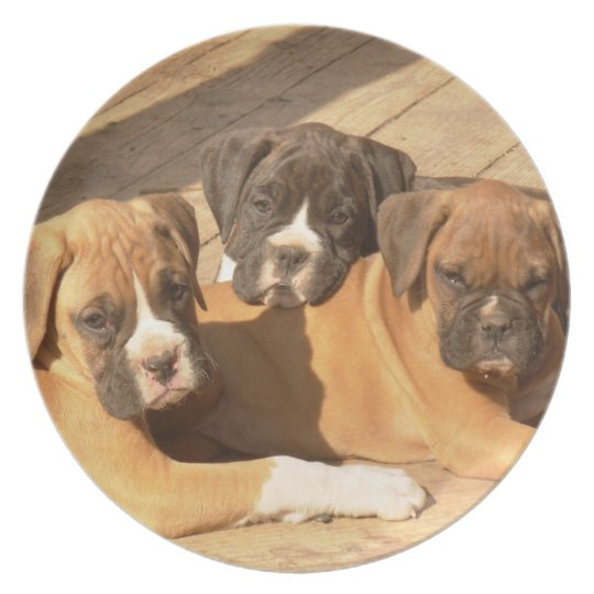 Boxer puppies decorative plate