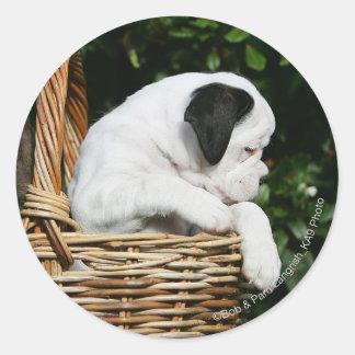 Boxer Puppies in Basket Round Sticker