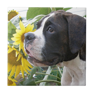 Boxer Puppy and Sunflowers Ceramic Tile