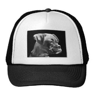 Boxer puppy hat