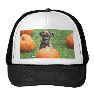 Boxer Puppy in Pumpkin Patch hat