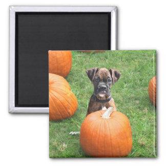 Boxer Puppy in Pumpkin Patch magnet