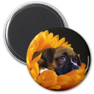 Boxer puppy in Sunflower round magnet