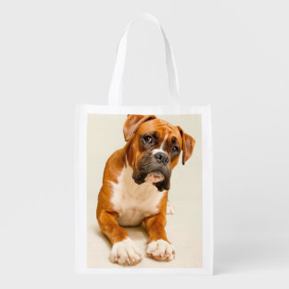 Boxer puppy on ivory cream backdrop.