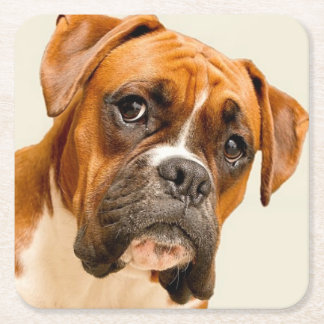 Boxer puppy on ivory cream backdrop. square paper coaster