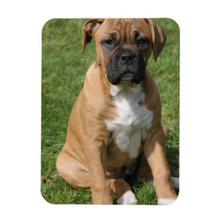 Boxer Puppy Premium Magnet Vinyl Magnet