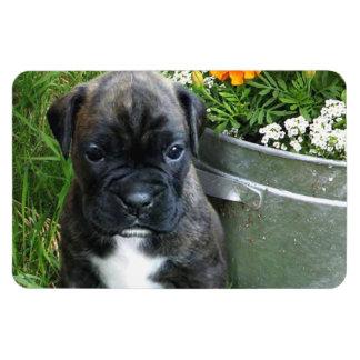 Boxer puppy rectangular photo magnet