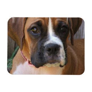 Boxer Rescue Premium Magnet Vinyl Magnet