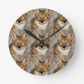 boxes of coyotes round clock