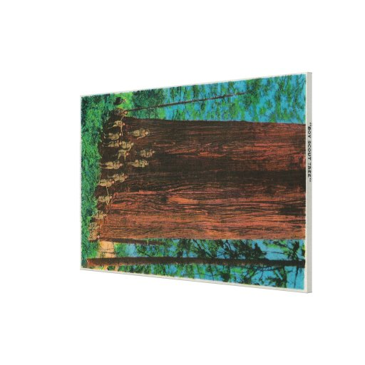 Boy Scout Tree on Redwood HighwayRedwoods, CA Stretched Canvas Prints