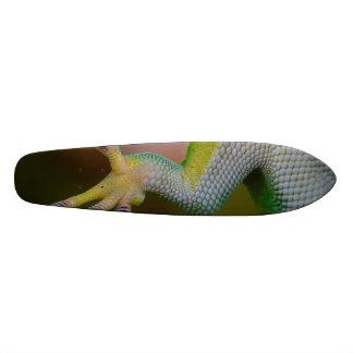 Boy's Gecko Skateboard