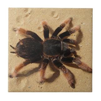 Brachypelma tarantula spider in sand ceramic tile