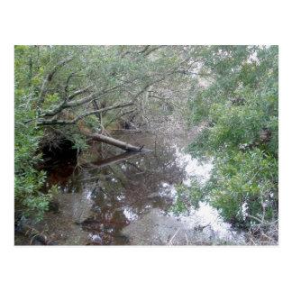 Brackish Wetland Buxton OBX Postcard