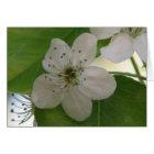 Bradford Pear Bloom Card